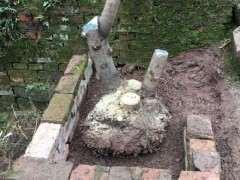 大花素心下山桩怎样洗根成活的方法 图片