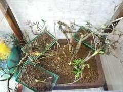 下山桩大概多长时间能生根?生根后有啥变化?
