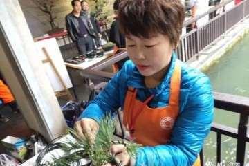 多才多艺的杭州女性盆景艺术家 冯学英