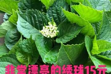 赣州茶亭琳跃大型花卉盆景批发基地