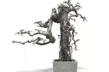 怎么采挖榆树制作老桩盆景 图片