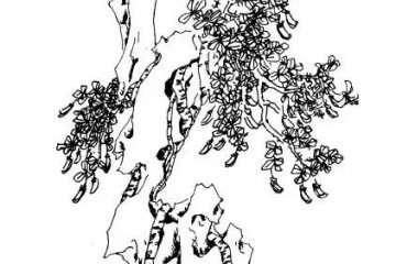 连根盆景怎么促生根的制作技巧 图片