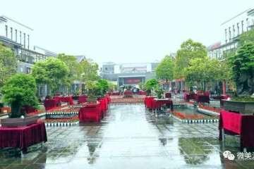湄潭 中国茶城250盆省内外盆景等您观赏