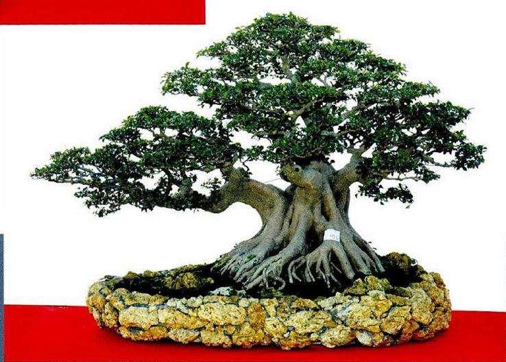 北京世园会期间有几个专项国际盆景竞赛