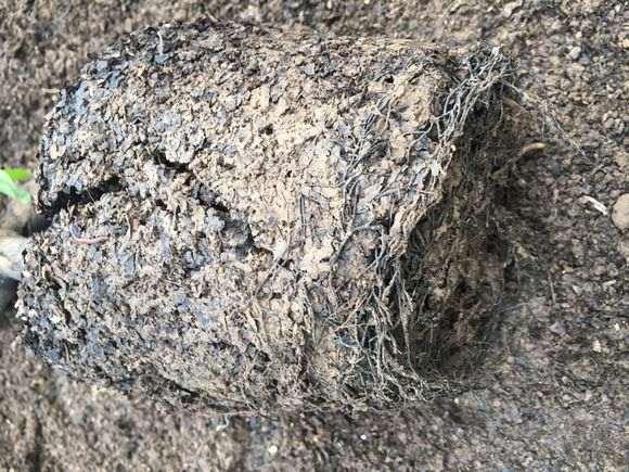 分享一个金弹子下山桩土壤配方