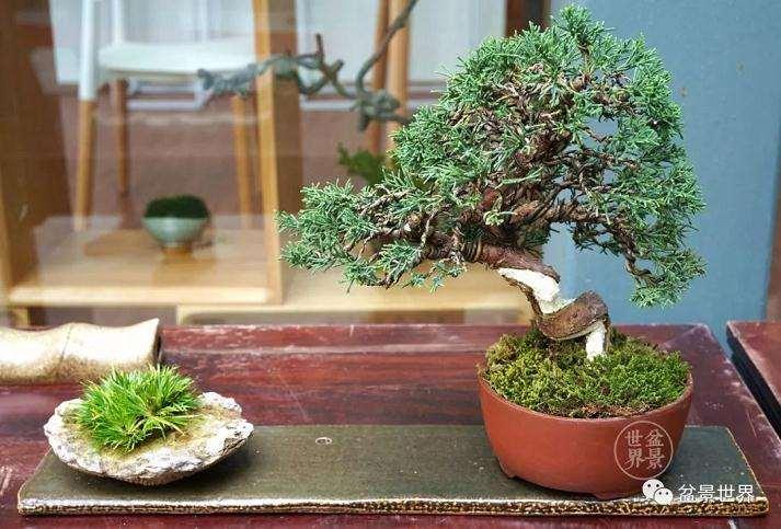 上海植物园盆景园负责人