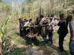 表哥挖到一棵金弹子下山桩 8个人才抬下山