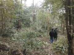 小编也跟着几个农村朋友一起走进山挖金弹子下山桩