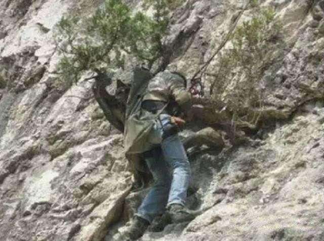 深山里挖枯死的崖柏下山桩违法吗