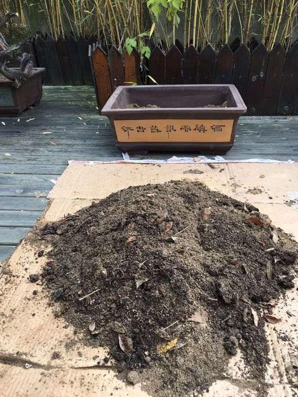 栽培崖柏下山桩的土壤用40%赤玉土和60%河沙