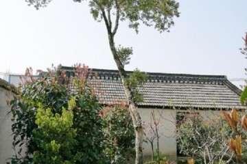 我家的一棵直径12厘米多的瓜子黄杨盆景