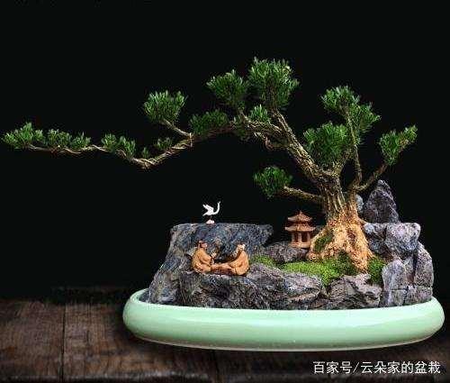 黄杨盆景的日常养护技巧