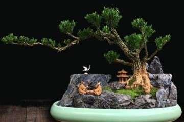 黄杨盆景的日常发芽养护技巧