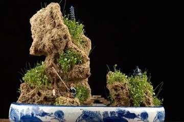 上水石盆景上有虫子怎么办 有没预防方法