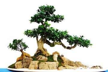 徐州最便宜的汉霖园盆景批发市场