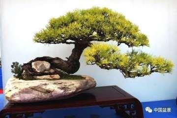 徐州汉霖园盆景批发市场建设的必要性