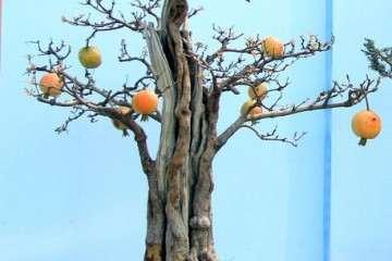 果树盆景发芽前半月怎么进行造型最好