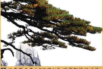 图解 制作迎客松盆景的9个步骤