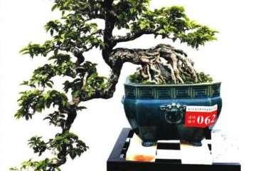 广州2019年首届盆景艺术展在十八罗汉山开幕