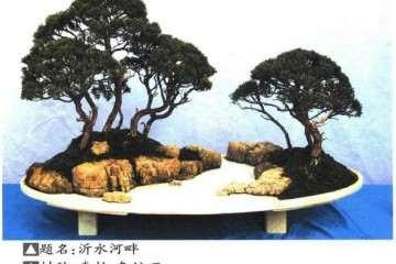 2019年个人盆景展在临沂雅鸣园举办 图片