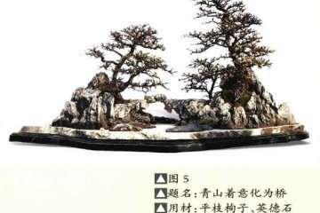 盆景作品中的树木 山石 摆件怎么布局