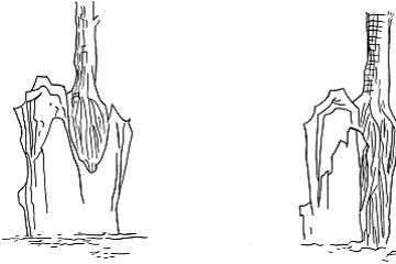 附石盆景怎么制作的4个方法 图片