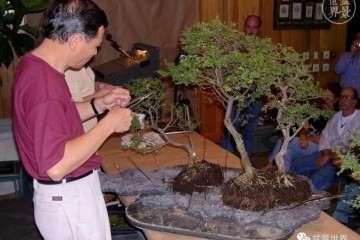 图解 赵庆泉大师制作做丛林盆景的过程