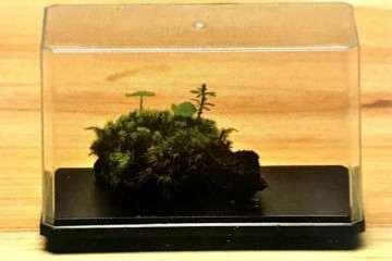 怎么制作盆景苔藓保湿器的方法 图片