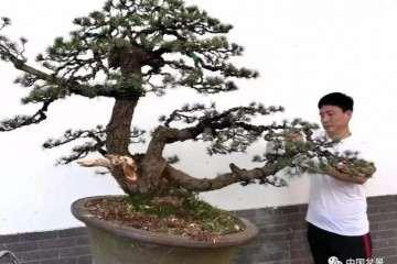 图解 樊顺利知道怎么制作花木盆景
