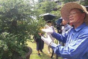 图解 谢荣耀演示岭南盆景修剪示范