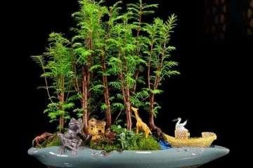 树桩盆景造型剪枝的4大剪枝方法