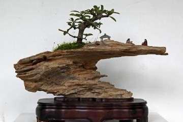 首届中国女盆景师作品展