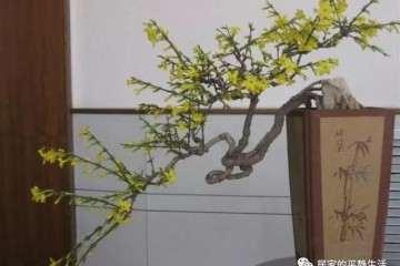 家里的盆景上突然出现了一条蛇皮