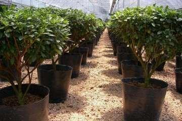 植物病害怎样诊断的4个方法 图片