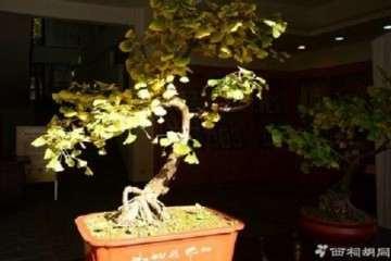 树木盆景栽种时怎样选盆的方法