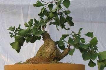 制作树木盆景的雕凿法与提根法