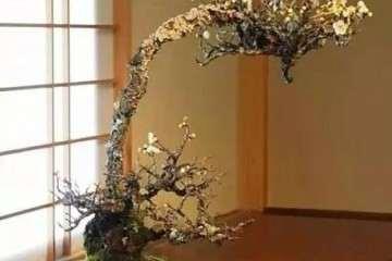 梅花盆景怎么造型的3个方法 图片