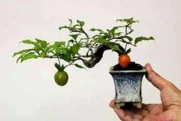 微型盆景怎样养护造型的方法