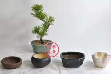 图解 小品盆景怎样换盆换土的方法