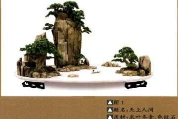 制作树石盆景怎样可以刚柔相济 图片