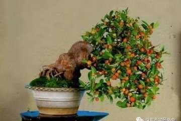 金豆盆景怎样修剪整形的方法 图片