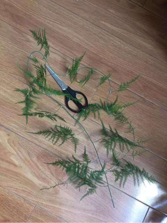 怎么修剪文竹盆景