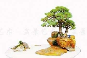 浅谈附石盆景作品怎么命题的方法