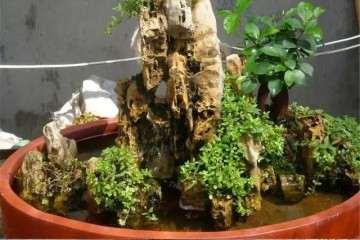 吸水石盆景怎么制作制作的方法