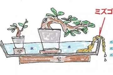 小型盆景夏季怎么防干燥的方法