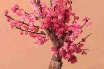 桃树盆景怎么浇水萌芽的方法 图片