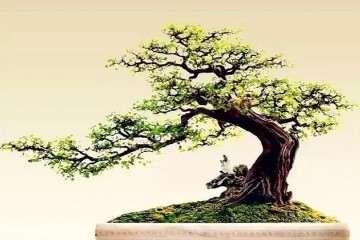 雀梅树桩盆景的虫害主要为天牛