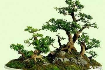 山石盆景怎么造型的3种方法 图片