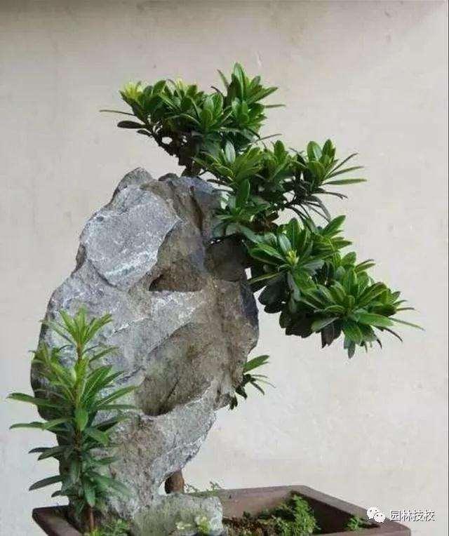 教你用简单的方法制作石头盆景