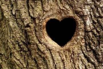 盆景树桩的孔洞处理手法和鉴赏